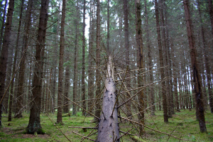 Tree: A lot of directions on a narrow path
