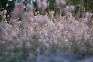 Picture of flowers with focus on the back end